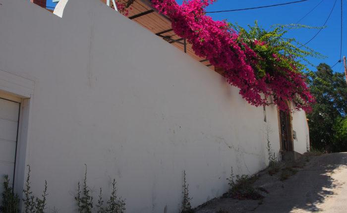 Una delle vie di Lachania a Rodi con i muri bianchi e fiori